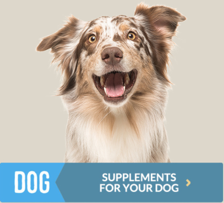 Supplements for your dog